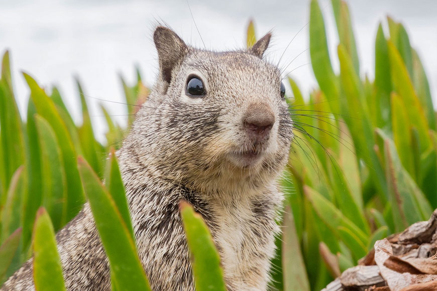 rodents - pest control service Folsom CA